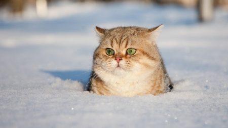 Синоптики попередили про ускладнення погодних умов на Кіровоградщині