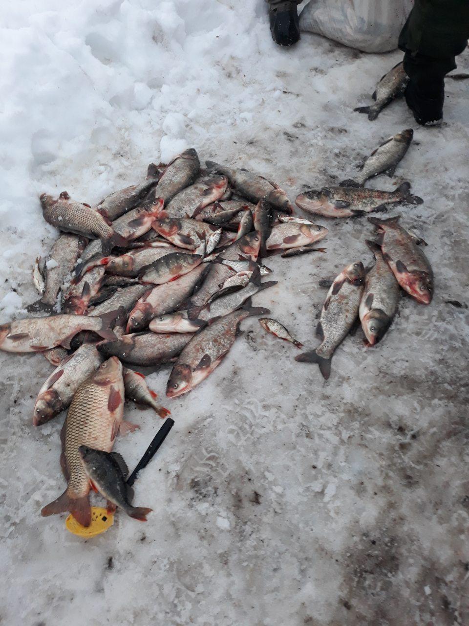 На Кіровоградщині у браконьєрів вилучили майже 300 кг риби - 1 - Життя - Без Купюр