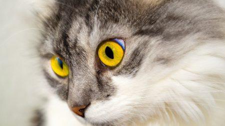 Власницю кота, в якого виявили сказ, оштрафували за відсутність щеплення у тварини
