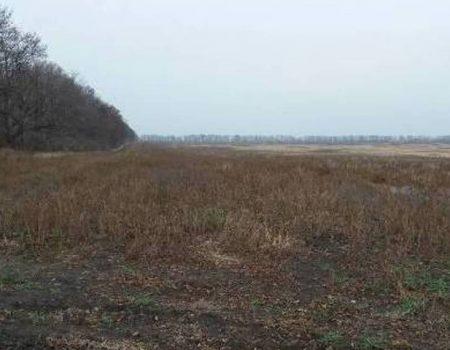 На Кіровоградщині підприємство подало до суду через недопуск до земельних торгів