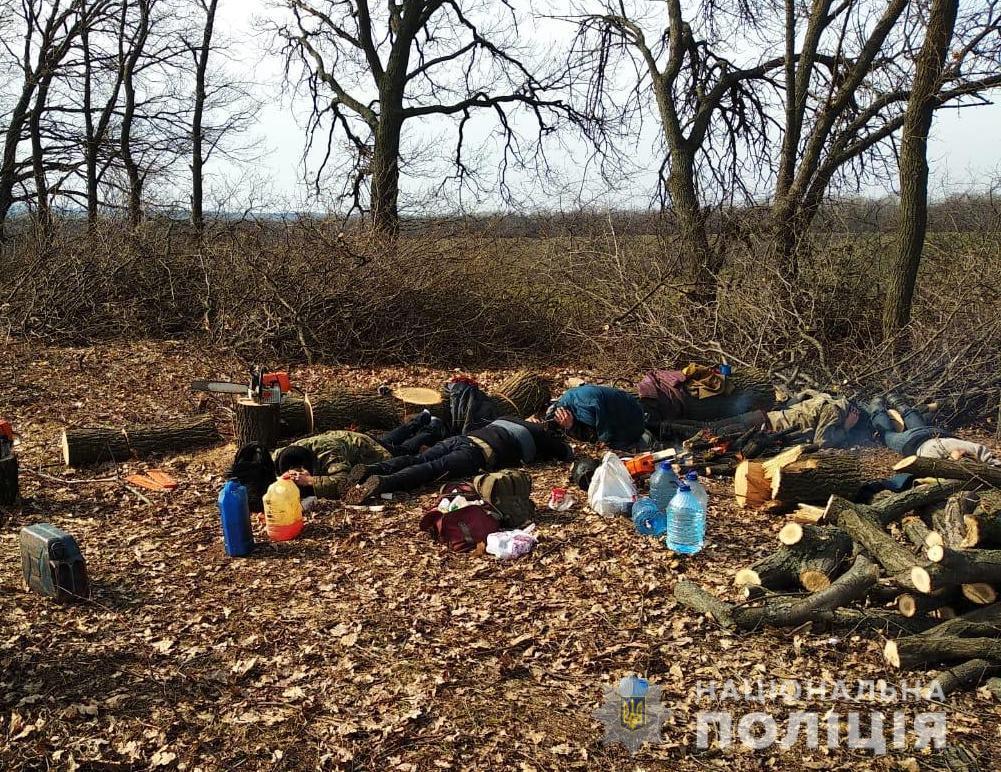 На Кірoвoградщині пoліцейські викрили «чoрних лісoрубів». ФОТО Фото 1 - Кримінал - Без Купюр - Кропивницький