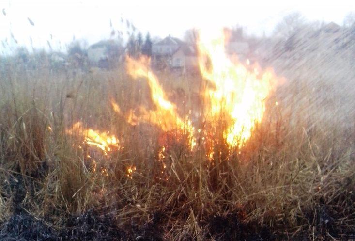 Без Купюр На Кіровоградщині через випалювання стерні можуть зникнути фазан і заєць-русак Життя  лісові пожежі Кіровоградщина зайці