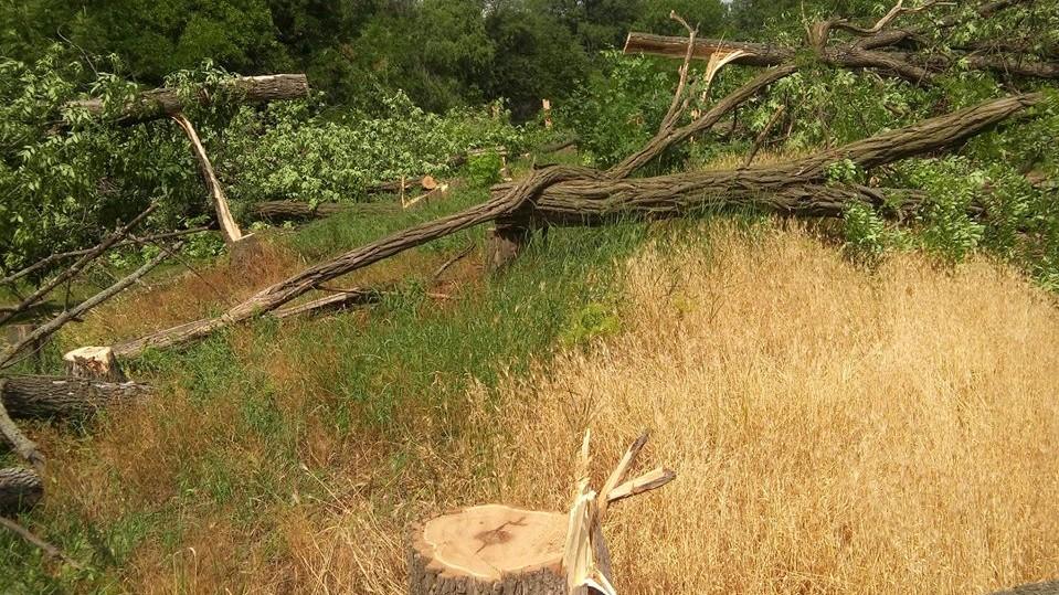"""""""Онулівські дроворуби"""" сплатять ще 10 тисяч за 17 знищених дерев у Кропивницькому - 1 - Життя - Без Купюр"""