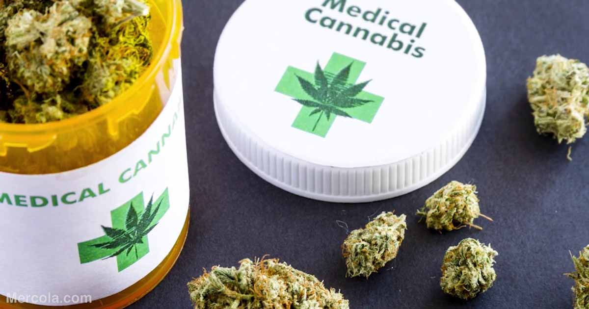 Петиція за легалізацію в Україні марихуани в медичних цілях набрала необхідні голоси - 1 - Україна сьогодні - Без Купюр
