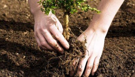 Мешканки Кропивницького вкрали декоративні рослини з-під адмінбудівлі лісівників. ВІДЕО