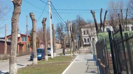 «Єлізавета» знову по-варварськи пообпилювали дерева у Кропивницькому