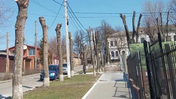 Без Купюр Громадські організації закликають заборонити варварську обрізку дерев у Кропивницькому Життя  Рада Експертів обрізка дерев Надія Паливода Кропивницький