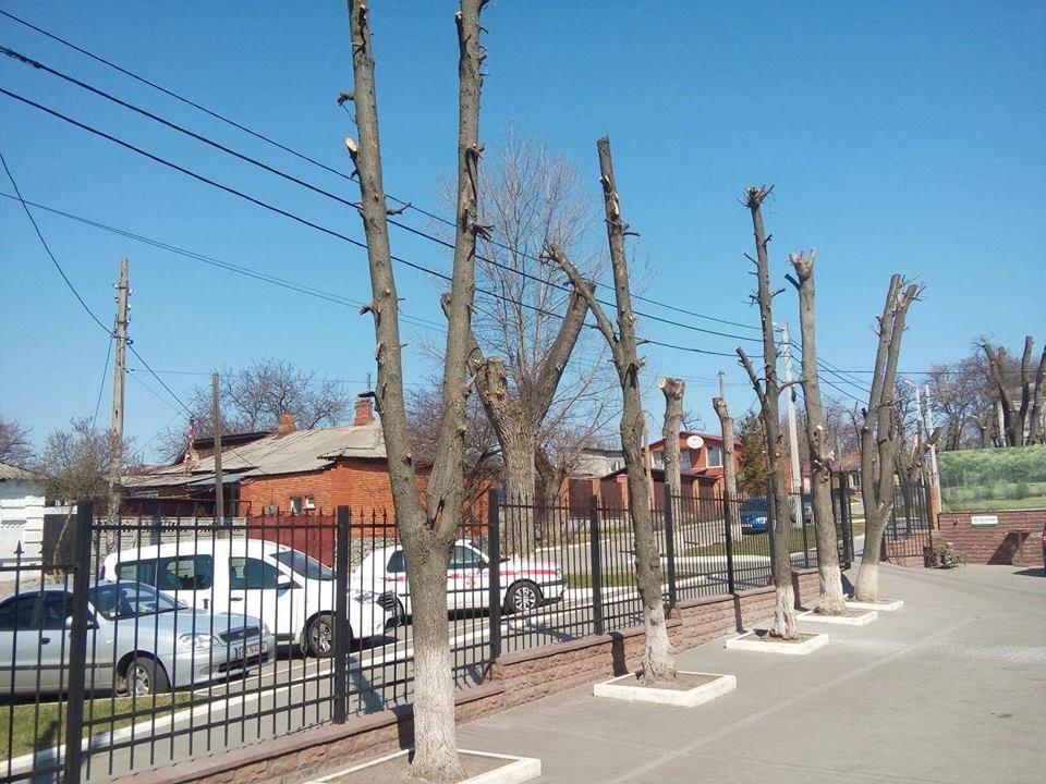 Без Купюр «Єлізавета» знову по-варварськи пообпилювали дерева у Кропивницькому Події  обрізка дерев Кропивницький КП Єлізавета