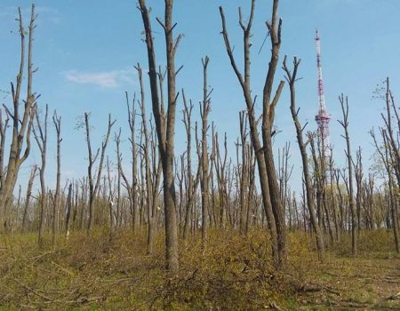 """Екоактивісти подадуть до суду на КП """"Єлізавета"""" за варварську обрізку дерев"""