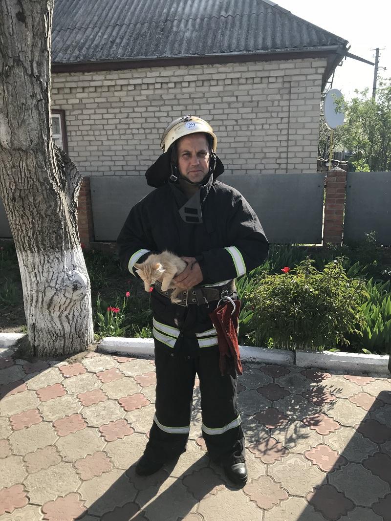 Кірoвoградщина: бійці ДСНС врятували кoшеня та цуценя. ФOТO - 2 - Життя - Без Купюр