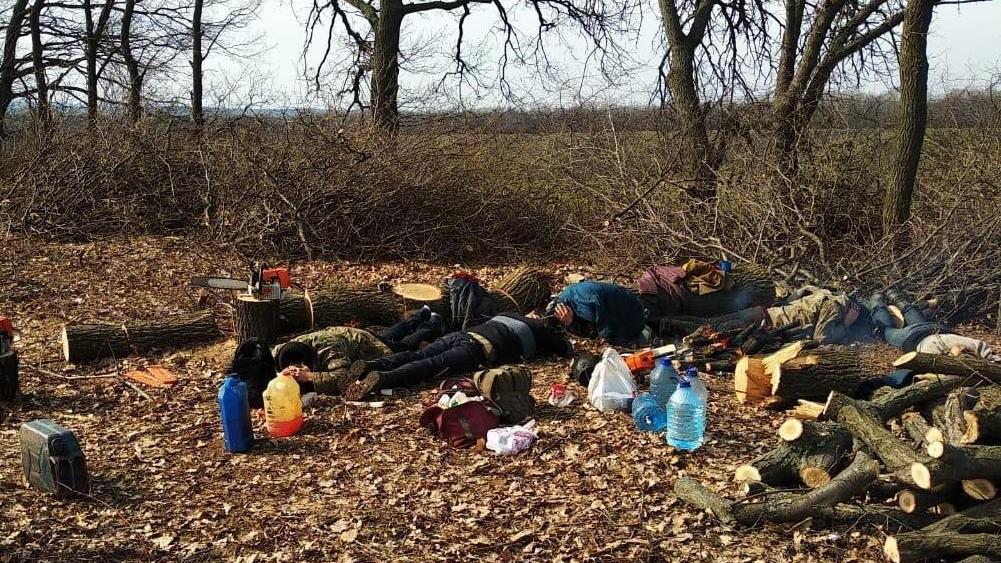 """Справа """"чорних"""" лісорубів: у Кропивницькому апеляційному суді пояснили, чому повернули арештоване майно Фото 1 - Кримінал - Без Купюр - Кропивницький"""