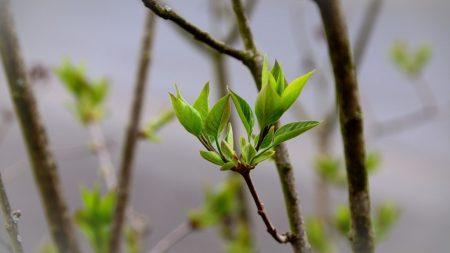 У Кропивницькому на трьох локаціях висадять 265 дерев