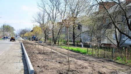 У Гайвороні на алеї Свободи висадили клени. ФОТО