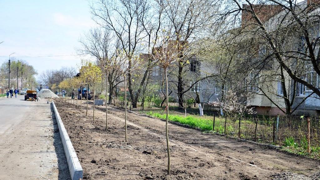 У Гайвороні на алеї Свободи висадили клени. ФОТО - 1 - Події - Без Купюр