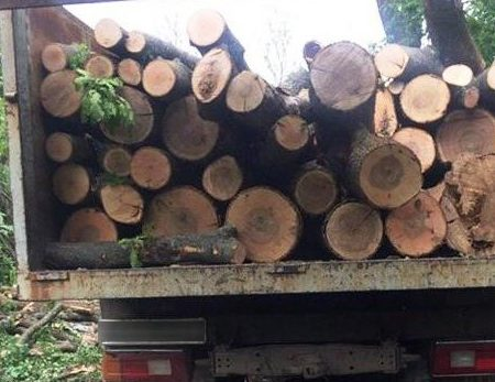 """У Новоукраїнському районі місцеві жителі """"заробили"""" на дровах до 5 років"""