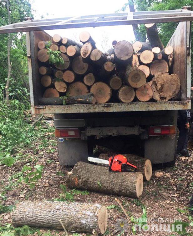 """У Новоукраїнському районі місцеві жителі """"заробили"""" на дровах до 5 років - 1 - Кримінал - Без Купюр"""