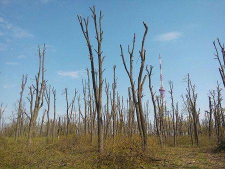 """Горбунова просять внести зміни в проект реконструкції парку """"Перемоги"""", щоб врятувати 7 тисяч дерев"""