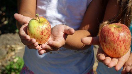 Скільки коштуватиме харчування у пришкільних таборах Кропивницького