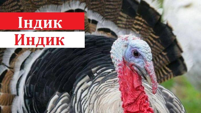 Кабмін схвалив новий правопис: як тепер писати правильно - 1 - Україна сьогодні - Без Купюр