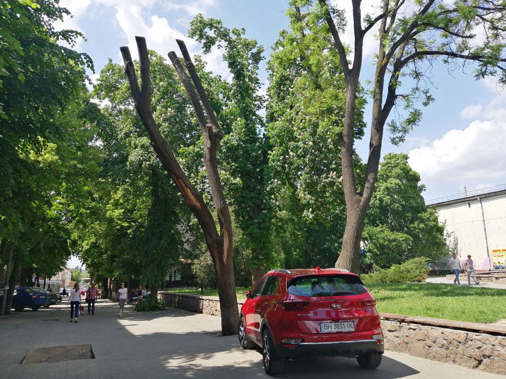Без Купюр Депутати не проголосували за мораторій на обрізку дерев у Кропивницькому Політика  обрізка дерев Кропивницький
