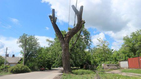 """Райкович підписав розпорядження про заборону """"варварської"""" обрізки дерев"""