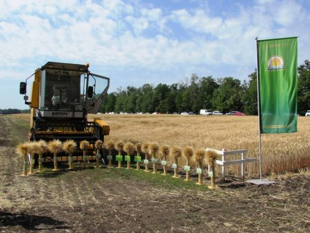 На Кіровоградщині відбудеться Міжнародний День поля