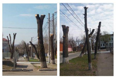 У Кропивницькому вимагатимуть заборонити нищівну обрізку дерев