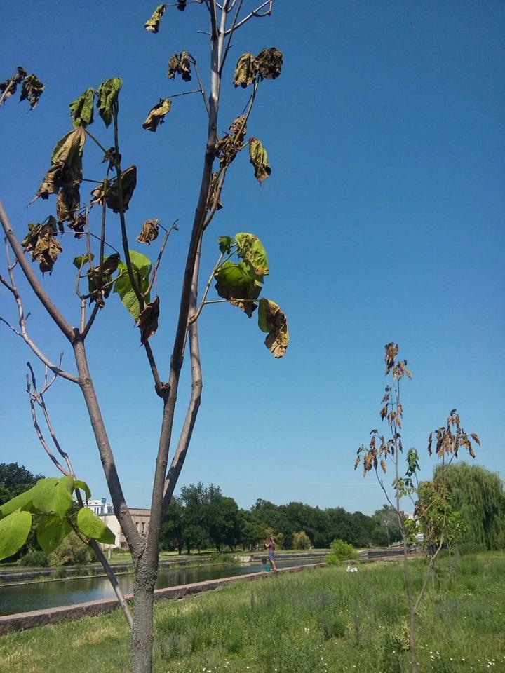 Без Купюр Кропивничан закликають полити молоді дерева на Набережній Життя  Кропивницький дерева