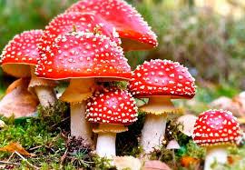 Кіровоградщина: 19-річна дівчина померла від отруєння грибами