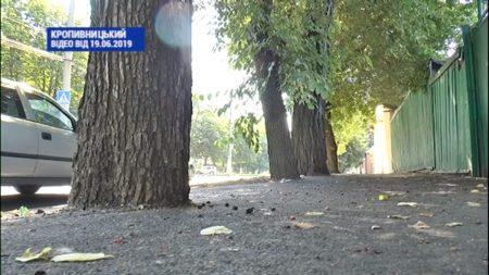 У Кропивницькому будівельників змусили відколупати асфальт навколо дерев. ВІДЕО