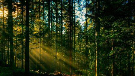 У Кропивницькому депутати взялися за зміну цільового призначення землі на Лісопарку