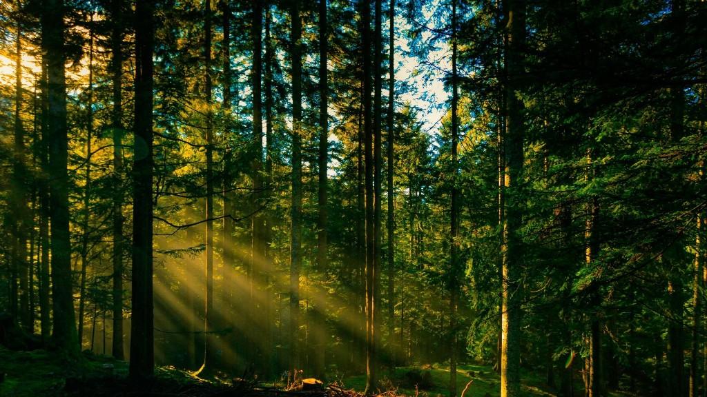 У Кропивницькому знову заговорили про встановлення меж природно-заповідної зони в районі Лісопаркової - 1 - Життя - Без Купюр