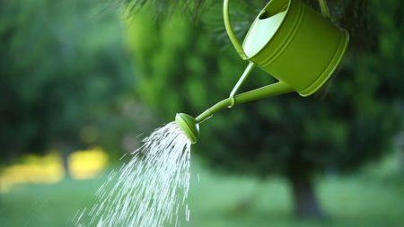 Кропивничан закликають полити молоді дерева на Набережній