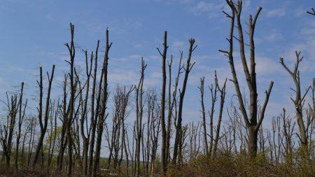 """Засідання суду стосовно обрізки дерев у парку """"Перемоги"""" перенесли через відсутність свідка"""