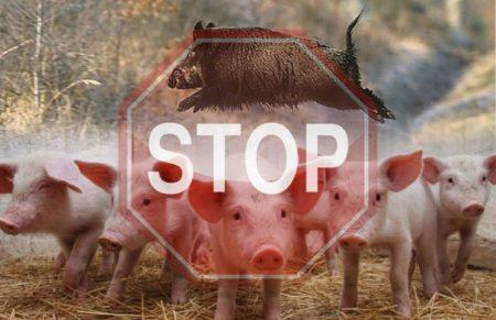 У 2019 року в області зареєстровано 2 випадки африканської чуми свиней