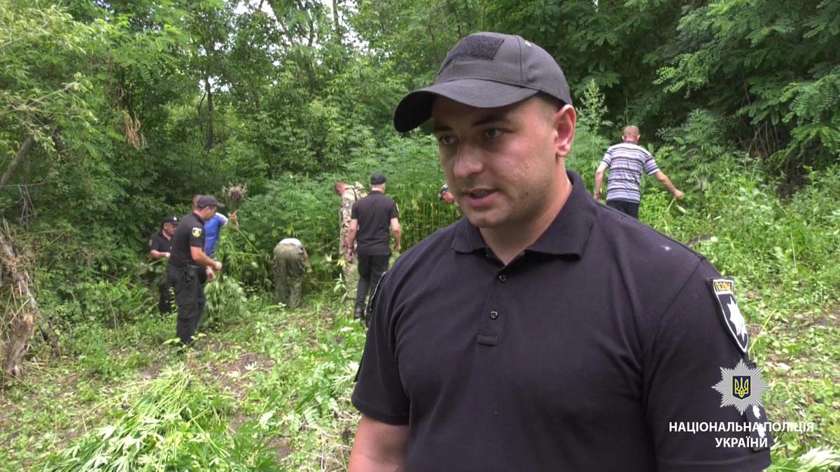 На Кіровоградщині виявили 6 плантацій конопель. ВІДЕО - 1 - Кримінал - Без Купюр