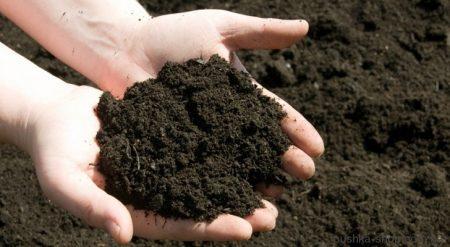 Кропивницький: лабораторний центр дослідив проби ґрунту і води на місці пориву каналізації на Кущівці