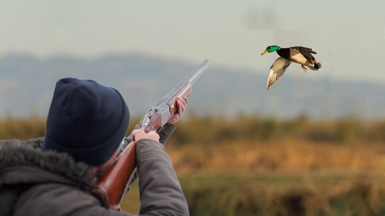 Без Купюр На Кіровоградщині розпочався сезон полювання Життя  полювання ліс