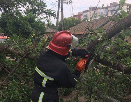 У Кропивницькому дерево впало на дорогу й перегородило рух транспорту