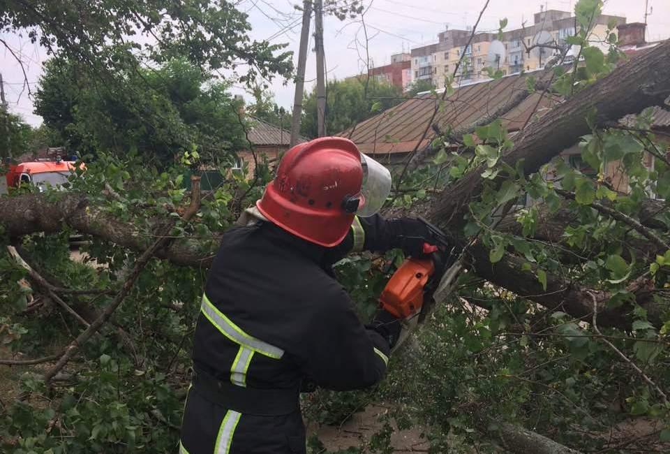 У Кропивницькому дерево впало на дорогу й перегородило рух транспорту - 1 - За кермом - Без Купюр