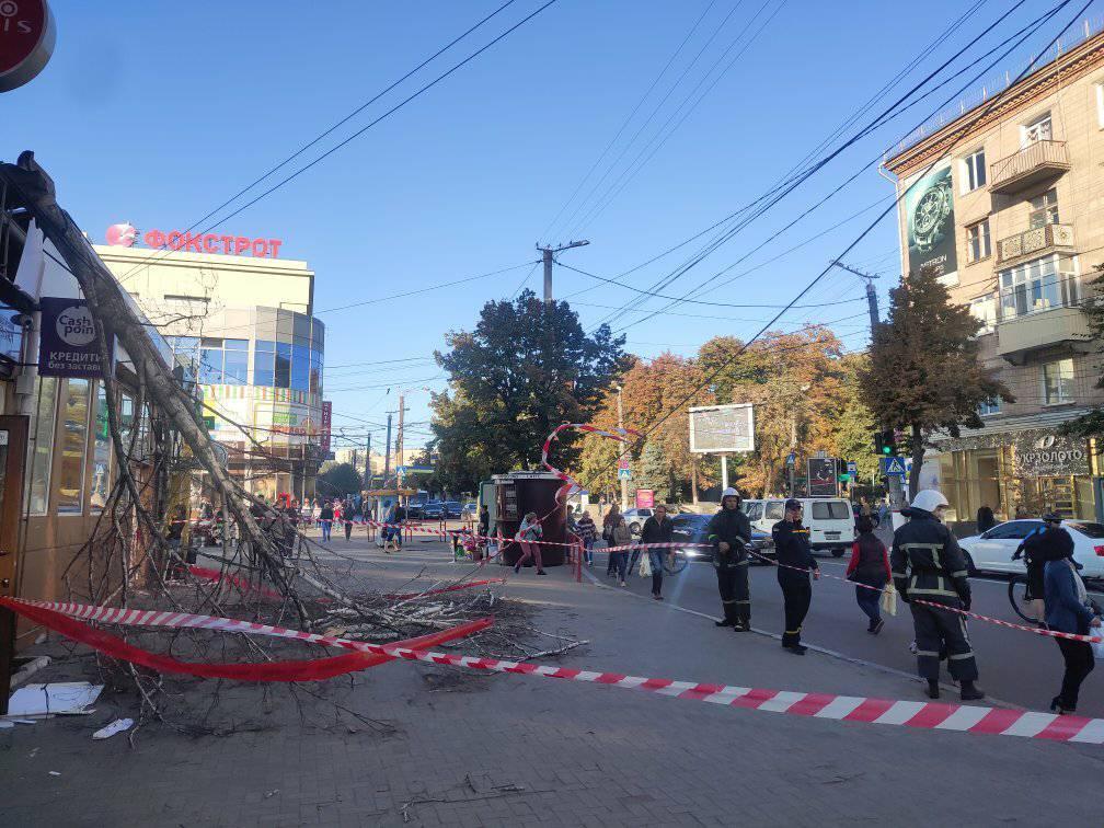 У Центрі Кропивницького  обвалилася береза замурована в магазин - 1 - Життя - Без Купюр