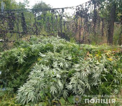 Кіровоградщина: поліцейські викрили 45-річного чоловіка, який вирощував вдома коноплі