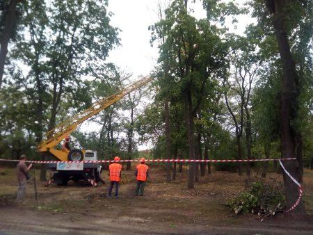 """Громадськість таки врятувала більшу частину дерев у кропивницькому парку """"Перемоги"""""""