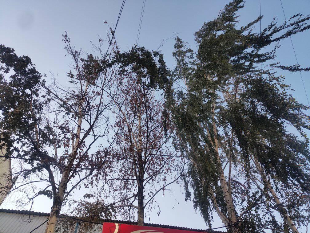 У Центрі Кропивницького  обвалилася береза замурована в магазин - 4 - Життя - Без Купюр