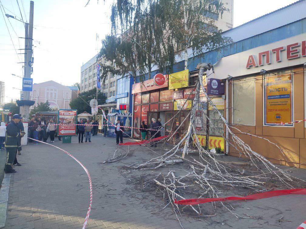 У Центрі Кропивницького  обвалилася береза замурована в магазин - 3 - Життя - Без Купюр