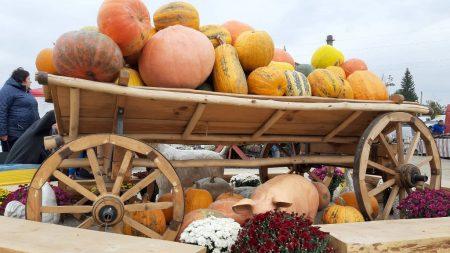 На кілька днів Кропивницький став серцем аграрного сектору країни. ФОТОРЕПОРТАЖ