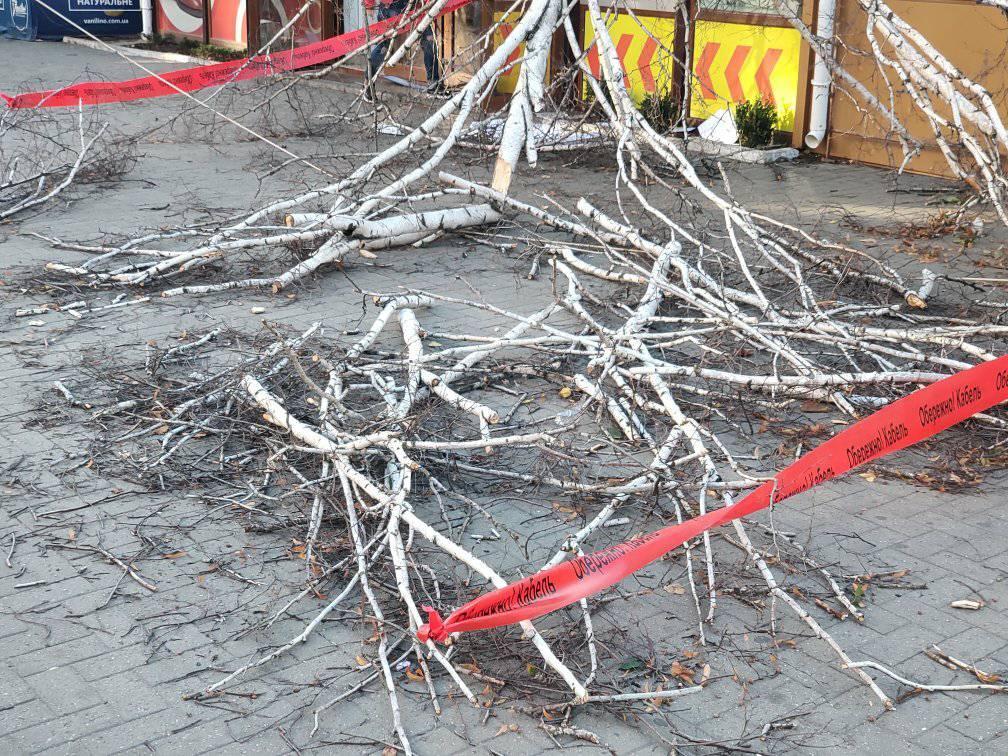У Центрі Кропивницького  обвалилася береза замурована в магазин - 2 - Життя - Без Купюр