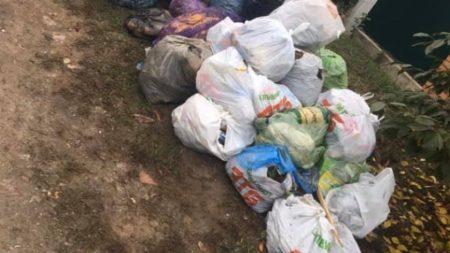 """""""Екостайл"""" відстає від графіка вивезення сміття через опале листя. ФОТО"""