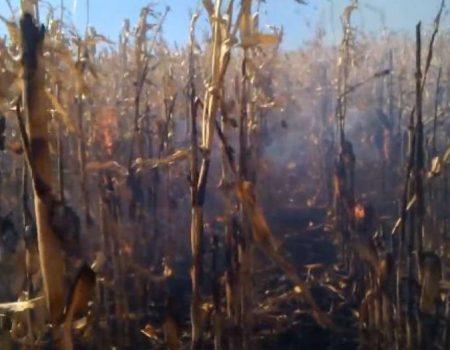 Двох людей госпіталізували в Голованівському районі через пожежу на полі