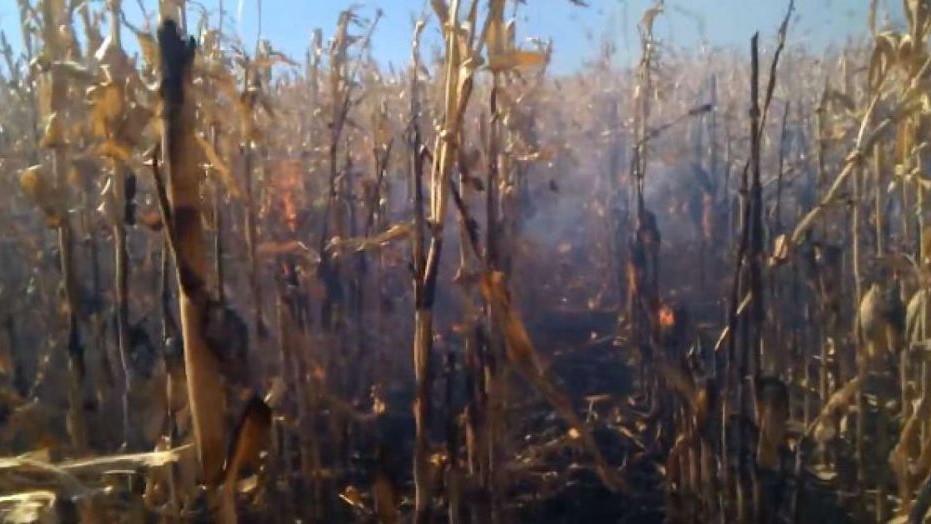 Двох людей госпіталізували в Голованівському районі через пожежу на полі - 1 - Події - Без Купюр